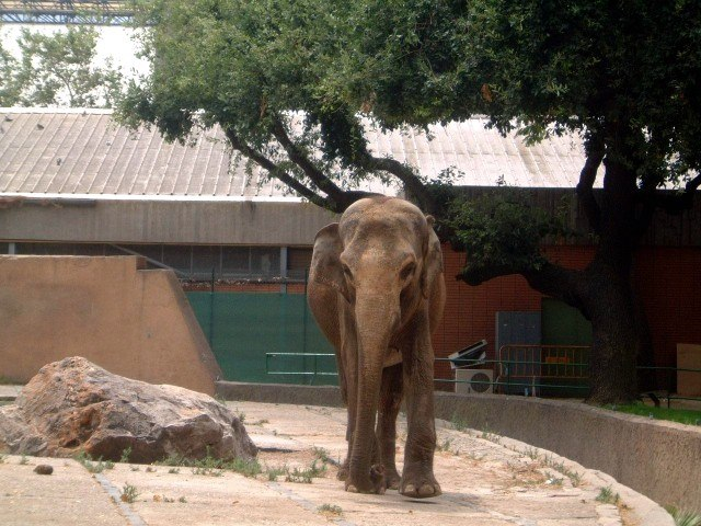 Photo 25 elephant exhibit copyright 07 2002 by mally for Elephant barcellona
