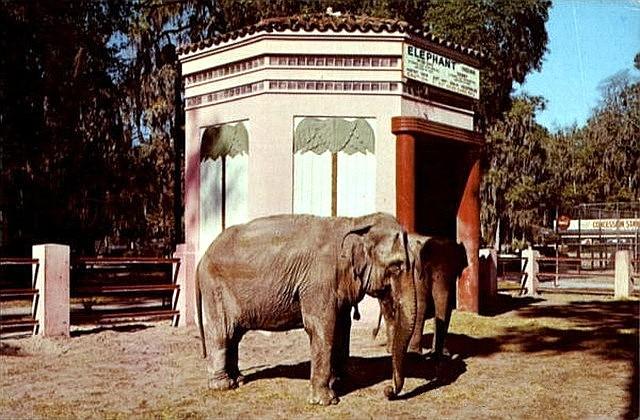 Jacksonville Zoo United States