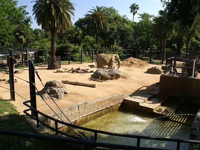 Photo 20 african elephant exhibit copyright 05 2011 for Elephant barcellona