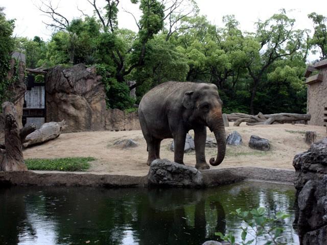 Zoo Asian